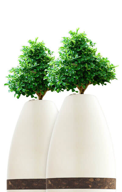 Biodegradable​ ​Urns | Biotree Urn for Humans